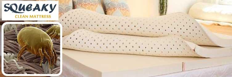 Expert Mattress Dust Mites Treatment