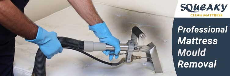 Professional Mattress Mould Removal